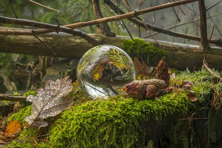 Glass ball lies on a tree stump overgrown with moss mirrored trees and cloudy sky Stock fotó