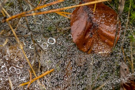 Spider web full of small dew drops on the forest floor with pine needles and autumnal foliage Stock fotó