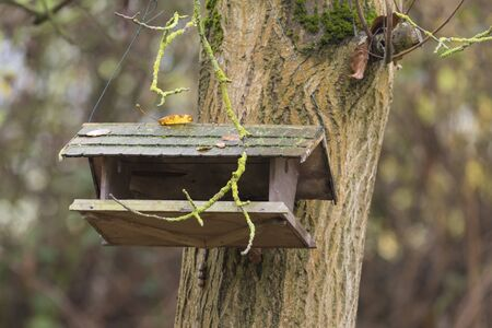 Old bird food house hangs on a walnut tree with autumnal foliage