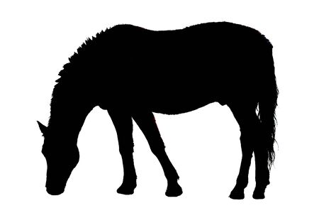Male Horse eating as illustration in black and white Stock Illustration - 134781881