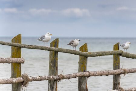 Seagulls stand on a wooden barrier in front of the sea with a cloudless sky