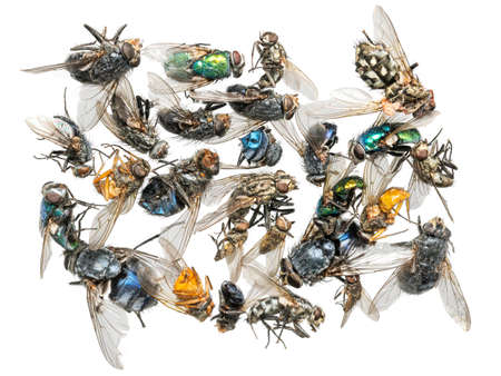 Many different colorful dead insects are in one pile.