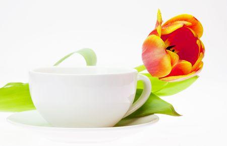 tulip and white mug isolated on white photo