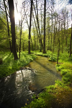 mountain stream running in the green wood Stock Photo - 7146975