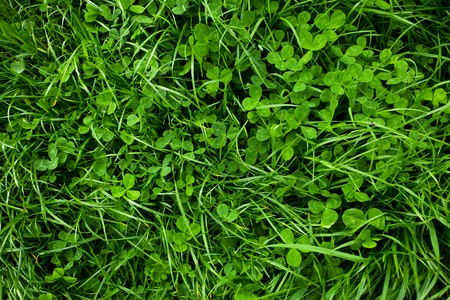 background of green grass Stock Photo - 7180980