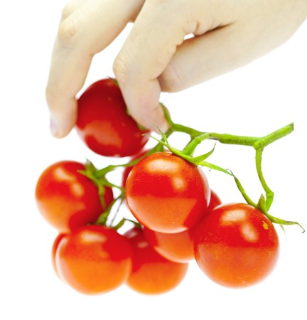 a bunch of tomatoes in the hands of a man isolated on white photo