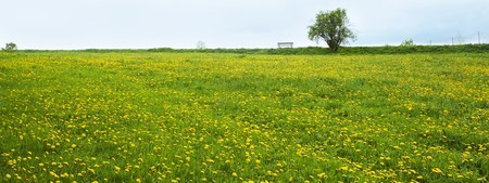 lonely tree and a bench on the field of dandelion against the sky Stock Photo - 7268187