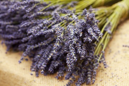 bunch of lavender Stock Photo