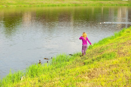 girl looking at the ducks with ducklings photo