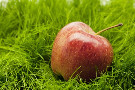 apple lying on green grass Stock Photo