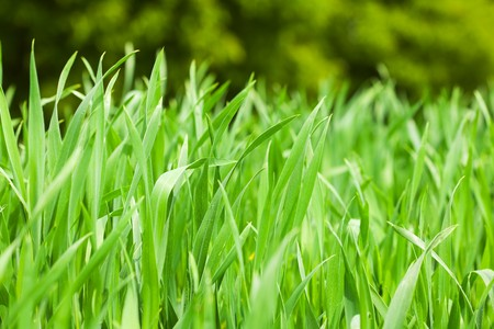 back yard: background of green grass Stock Photo