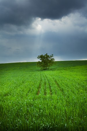 lonely tree in a field against the sky photo