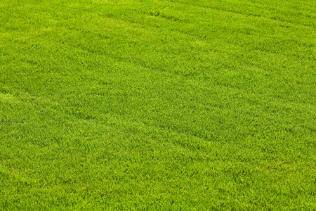 background tonsure on the grass lawn photo