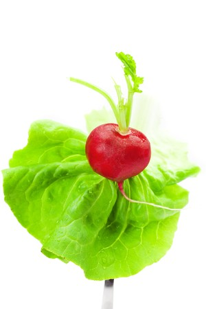 radishes and lettuce on a fork isolated on white photo