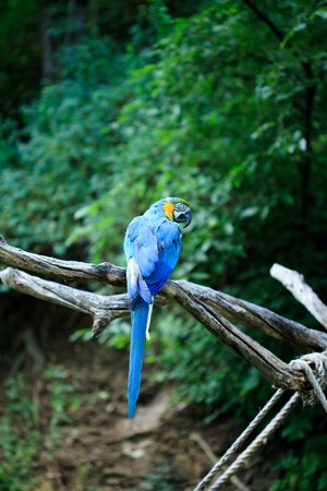 macaw sitting on a branch Stock Photo - 7716440