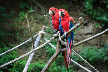 macaw�sitting on a branch Stock Photo - 7716334