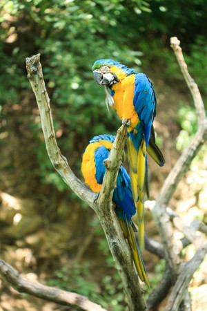 macaw�sitting on a branch Stock Photo - 7716292