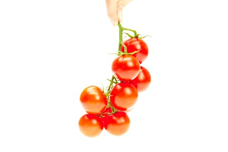 bunch of tomato in your hand man isolated on white photo