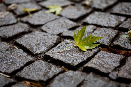 Background from the pavement with a maple leaf photo