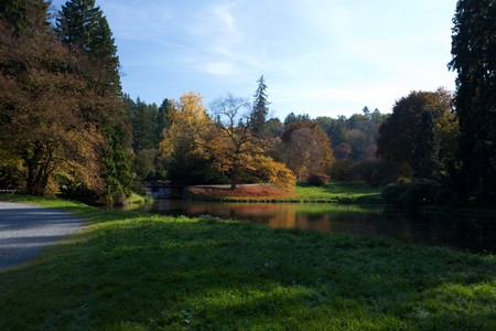 beautiful autumn landscape with colorful trees and a pond photo