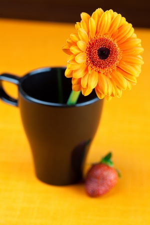 gerbera flower in a black cup of the orange fabric photo