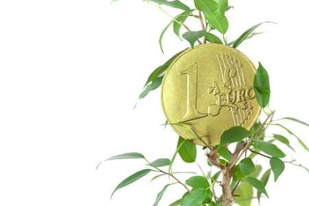ficus  and one euro coin isolated on white photo