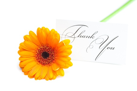 gerbera and a card signed thank you isolated on white photo