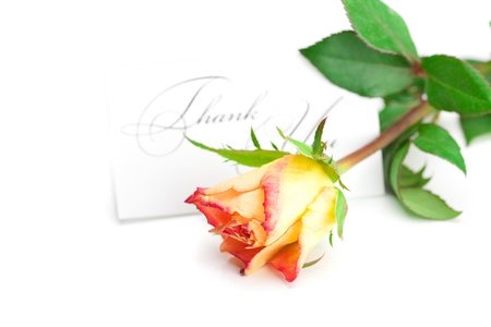 yellow red rose and a card  with the words thank you isolated on white photo
