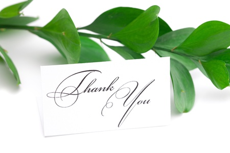 branch with green leaves and a card signed thank you isolated on white Stockfoto