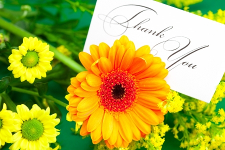 respond: yellow daisy,gerbera and card signed thank you on green background Stock Photo