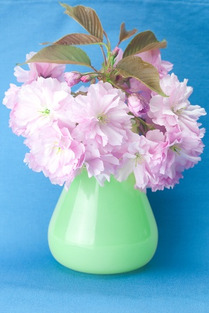 sakura flower in a vase and a card signed thank you on a blue background photo