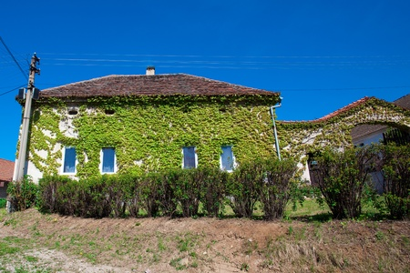 House entwined with ivy against the blue sky photo