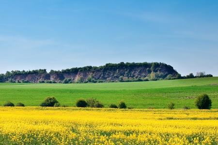 field of yellow rape and hills against the blue sky Stock Photo - 9527764