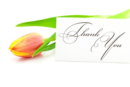 colorful tulips and a card signed thank you isolated on white photo