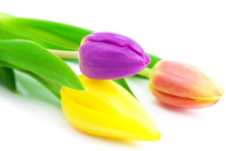 Bunte Tulpen isoliert auf weiß Standard-Bild - 9663188
