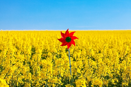 pinwheel  in a field of yellow rape against the blue sky photo