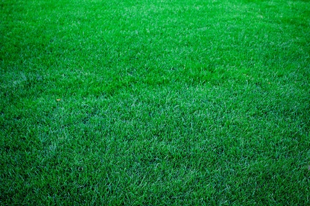 lawn area: background of lush green grass