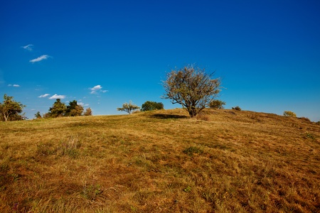 tree standing on the hill against the blue sky Stock Photo - 11004172