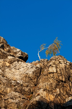 lonely tree on the slope of the rock against the blue sky Stock Photo - 11712431