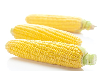 ripe yellow corn isolated on white