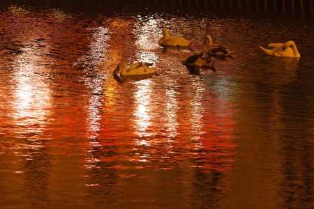 Swans float on the water at night photo