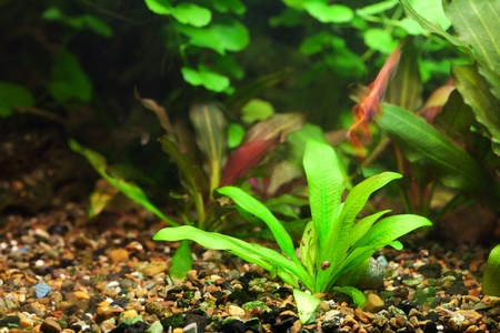 background of the aquarium with green plants Stock Photo - 12307402