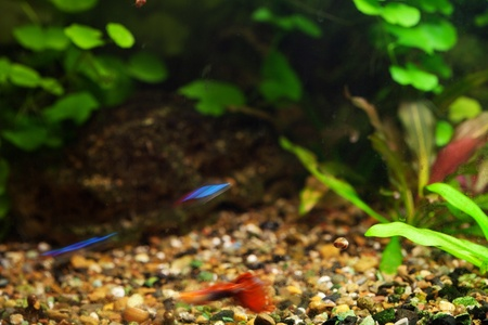 echinodorus: background of the aquarium with green plants