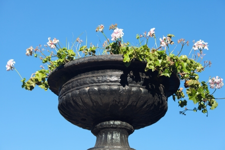 vase of white flowers against the blue sky photo