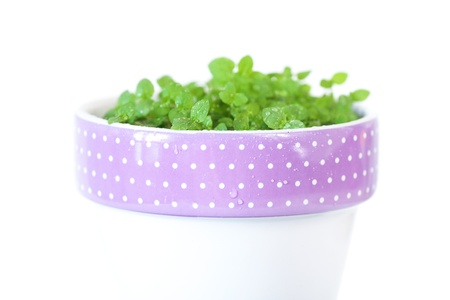 mint in a pot isolated on white photo