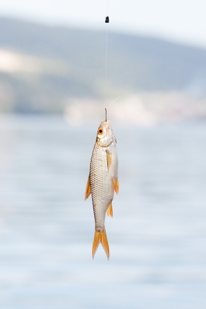 fish hanging on a hook on a background of water photo