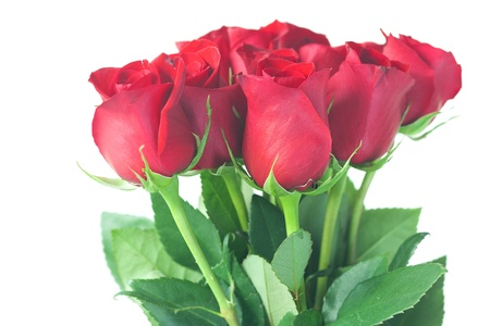beautiful bouquet of red roses isolated on white photo