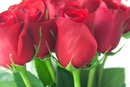background of a beautiful bouquet of red roses photo