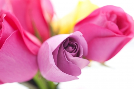 background of bouquet of colorful roses photo