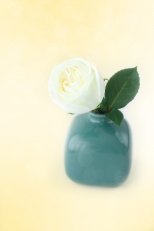 beautiful white rose in a vase with bokeh photo